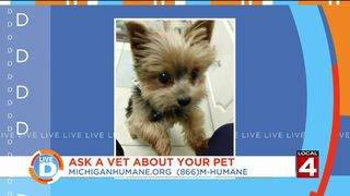 Got questions about your pet? Our vet has answers!