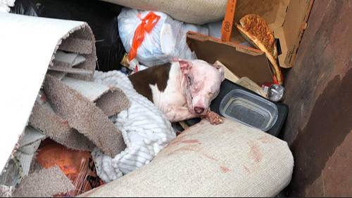 Women rescue abandoned, severely injured dog in dumpster