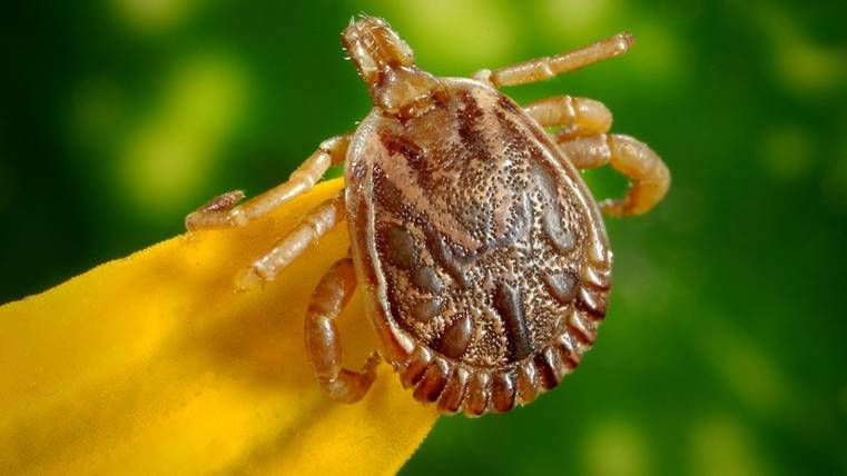 Why it's important to catch Lyme disease early