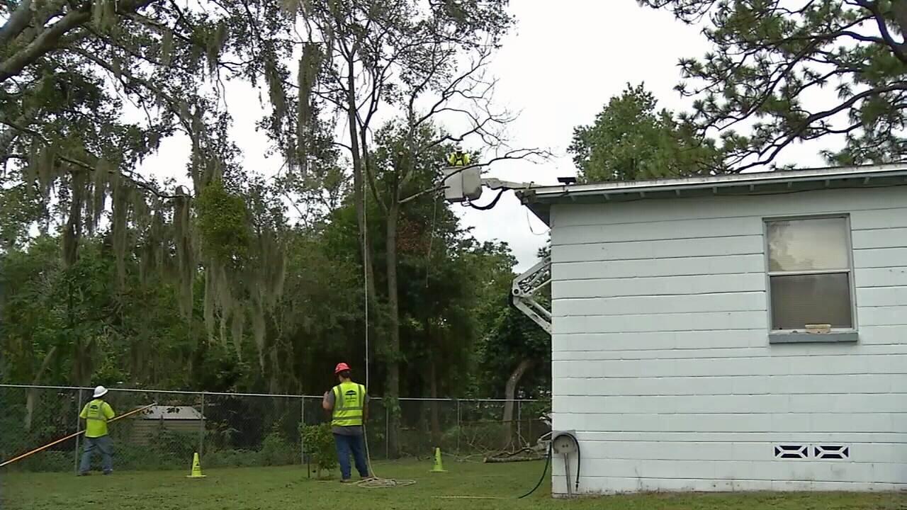 Dead tree removed_1568309700538.jpg.jpg