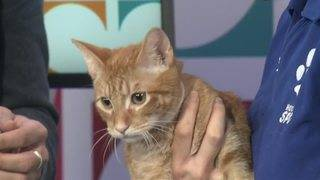 Houston SPCA's Pet of the Week & Your Weekend Art Attack