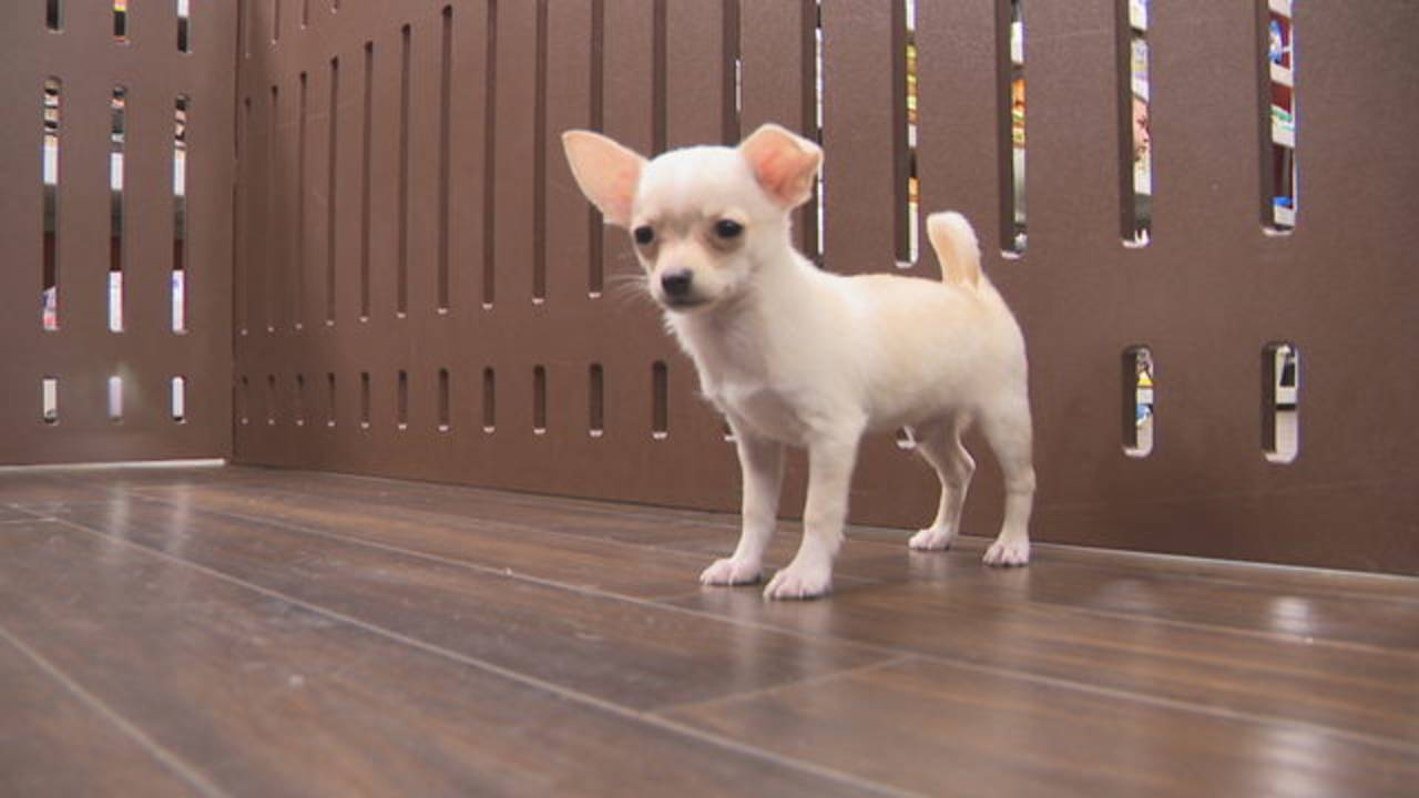 Pet store donates puppy to Broward girl
