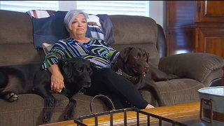 Pair of loyal Labs save their owner's life