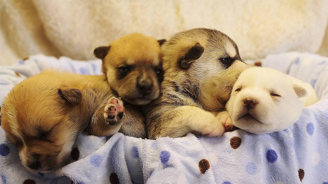 sa-pets-alive-puppies_1554232722161.jpg