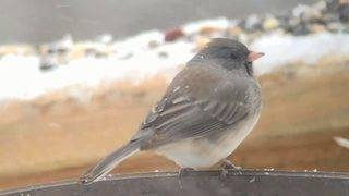 Wildlife center urges people to set out bird feeders before snow