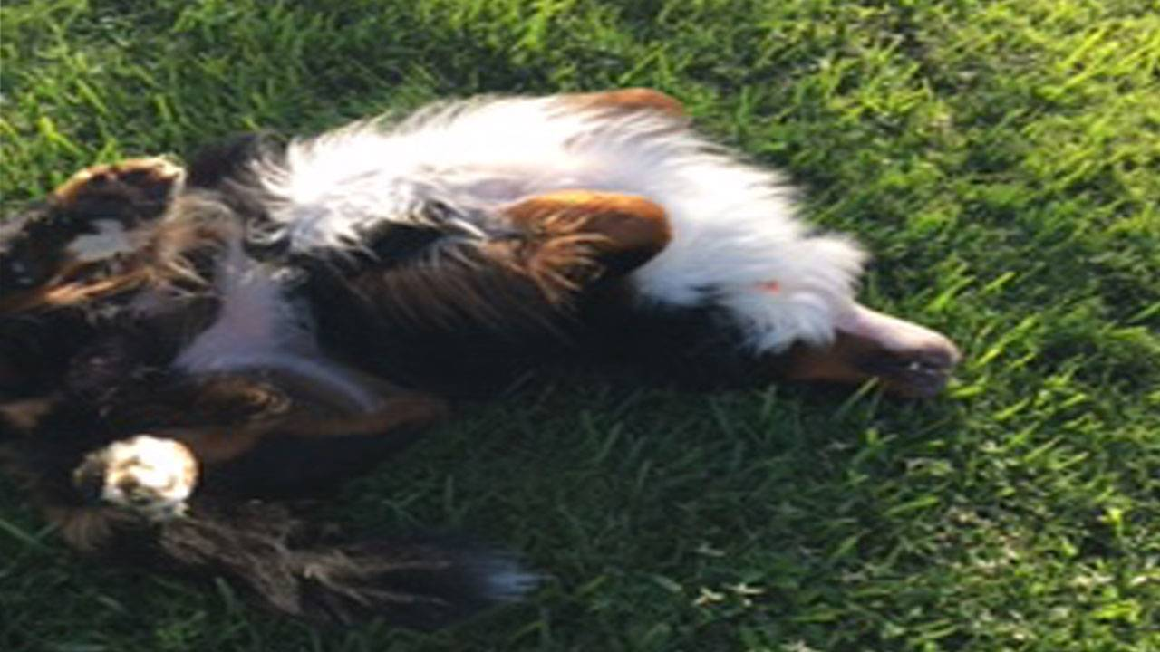 Gibson in the grass