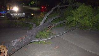 Winds knock down tree onto Houston street
