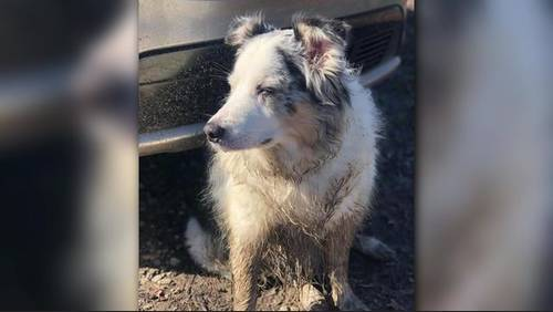 Family reunited with dog after more than 8 years