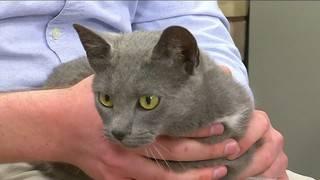 Pet of the Week: Meet Jenny, the Cat