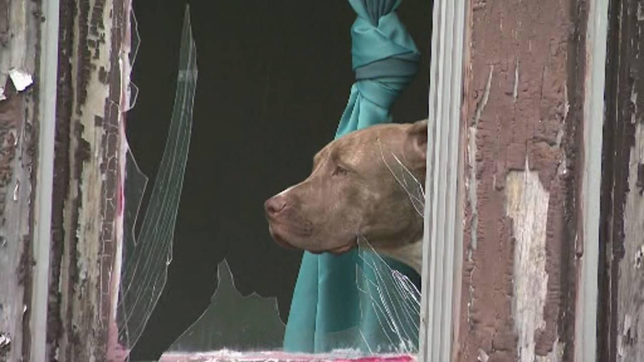 Windows shattered dog explosion Detroit's west side
