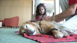 How therapy dogs are helping nervous children unwind during doctor visits