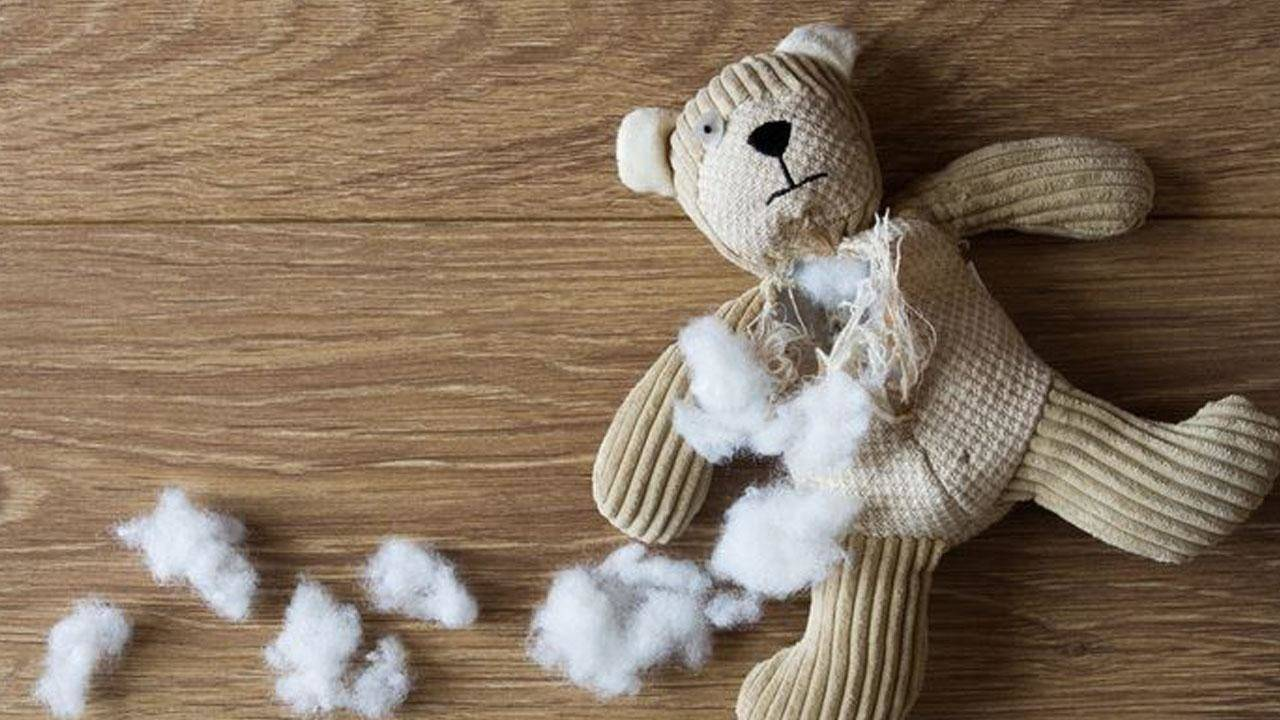 Camera Found Inside Toy Bear Won By A Child At Tennessee Fair