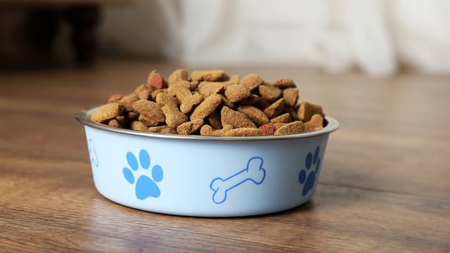 Best Dog Food Brands On The Market