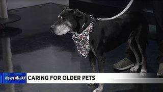 Caring for older pets