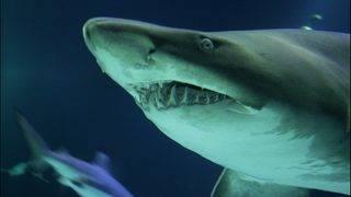 Shark attacks man surfing at Australia's Byron Bay