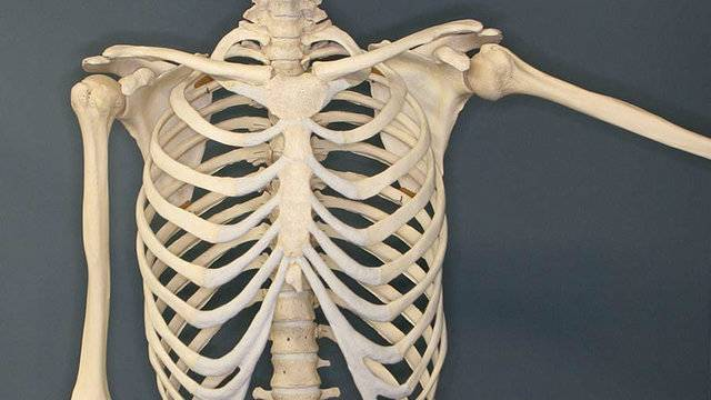 University Of Michigan Gets Musculoskeletal Research Grant