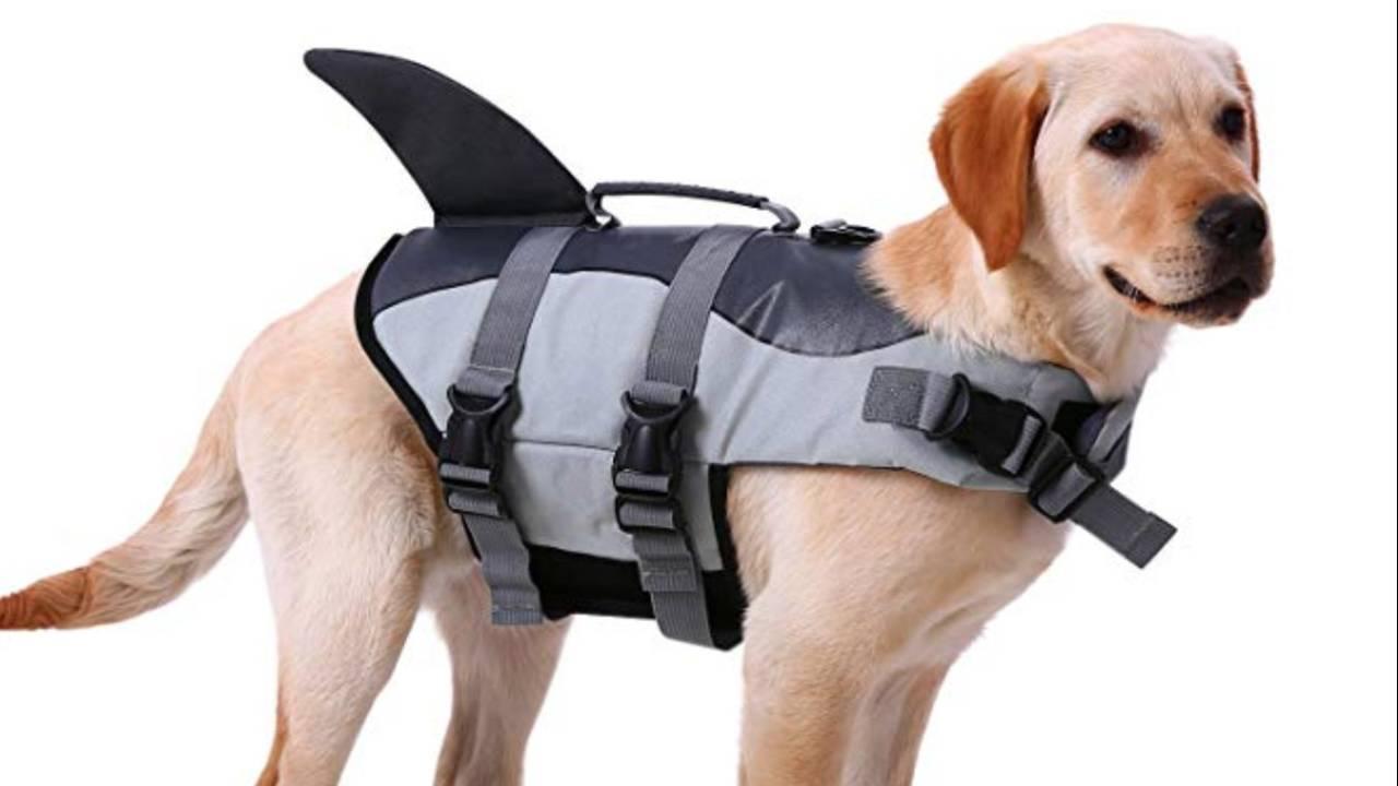 dog_life_jacket_1554823878066.jpg