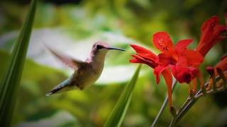 Do S And Don Ts Of Attracting Hummingbirds Getting One To