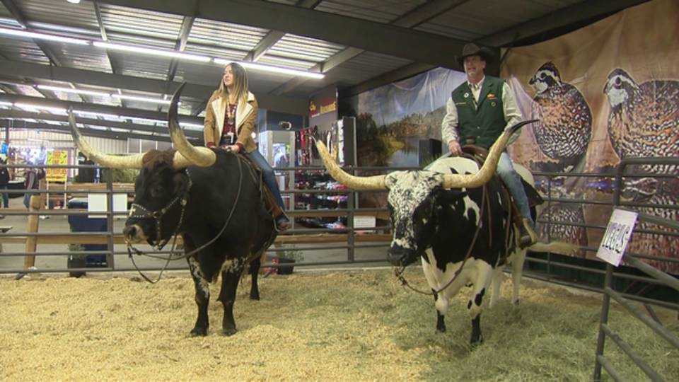 texas-longhorns-rodeo_1518477310222.png