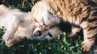 Are dogs smarter than cats? Maybe, study finds