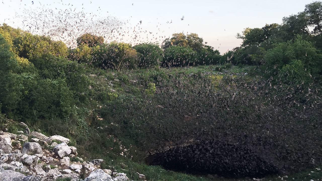 bats-bracken-cave_1497283081055.jpg