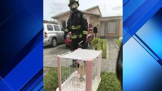 Pug dog, 4 others rescued from Hialeah house fire