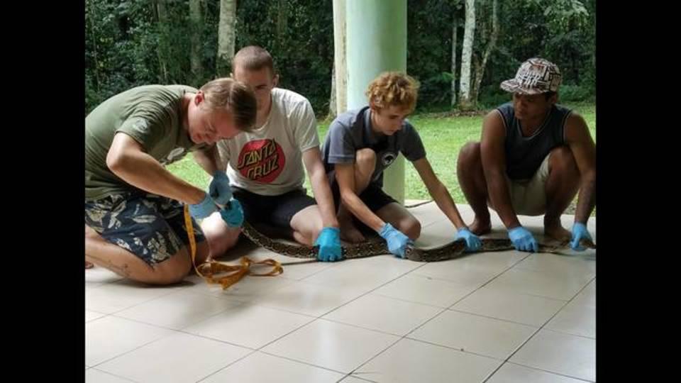 measuring snake boreno_1512585575585.jpg