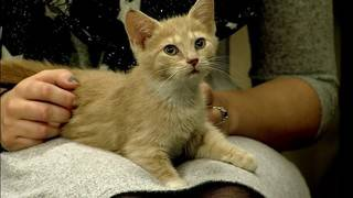 Pet Of The Week: Meet Alayna & Jenny From The RVSPCA