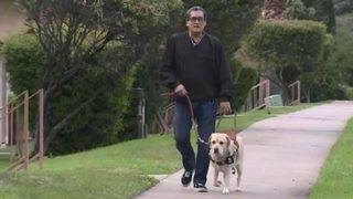 Lyft Fires Driver Who Refused to Give Blind Man Ride Because of His Guide Dog