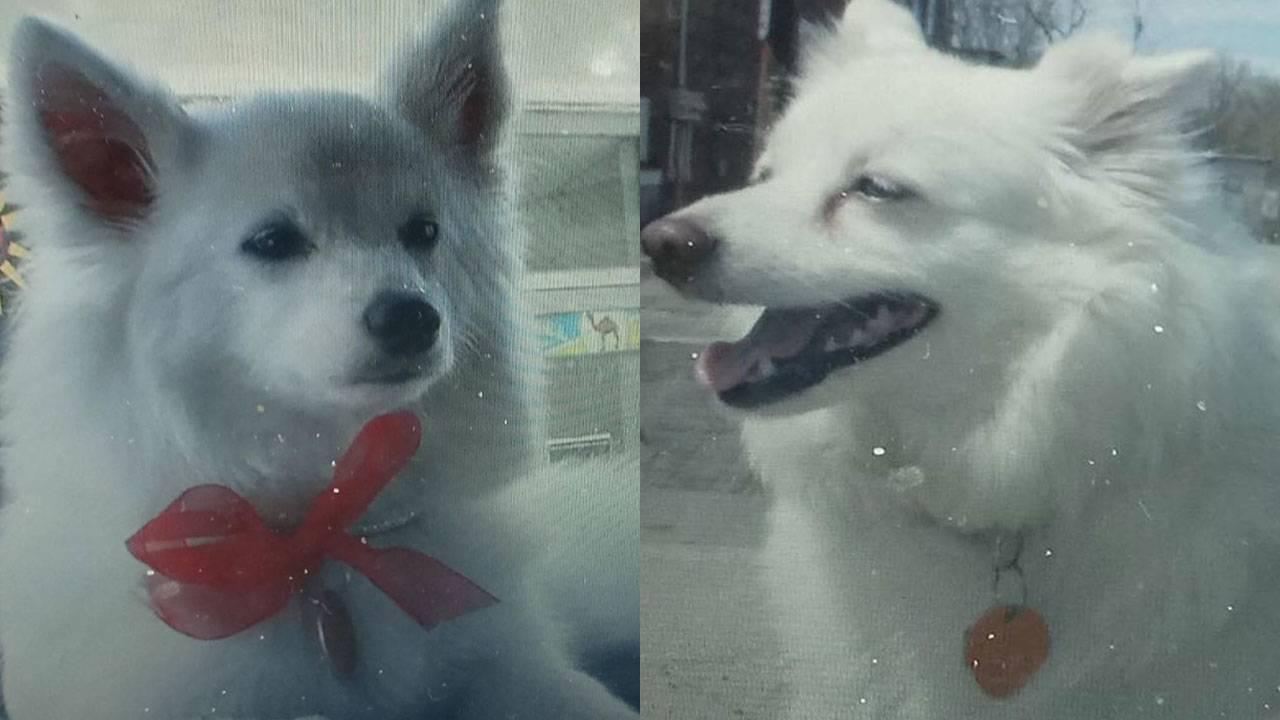Dog De La Rosa story