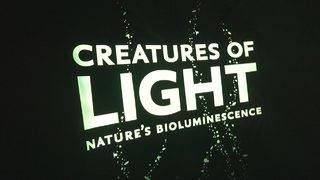 New exhibition at Frost Science explores light-producing organisms
