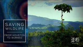 WATCH: 'Saving Wildlife: From Houston to Borneo'