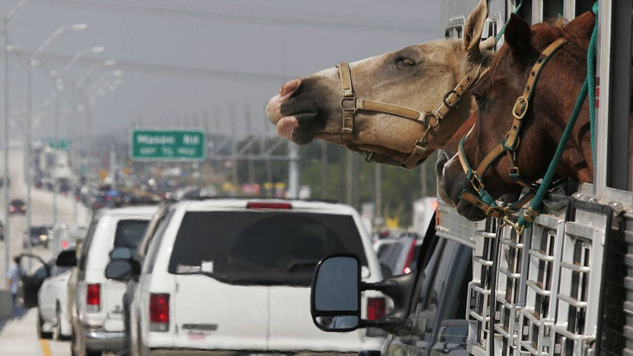horse houston traffic getty