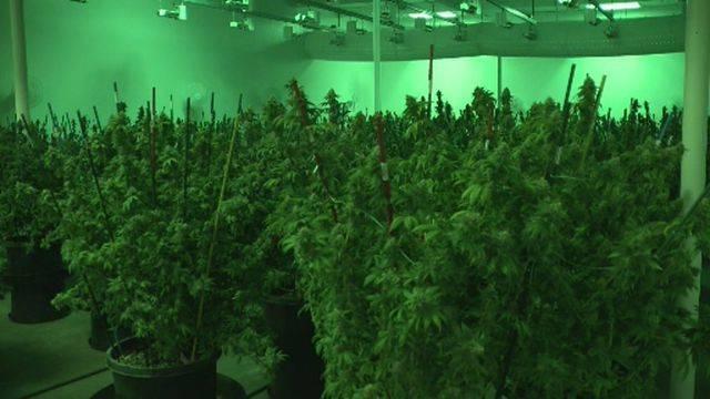 Detroit million-dollar marijuana bust 1