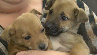 Registration open for Martinsville-Henry County SPCA's puppy-grams