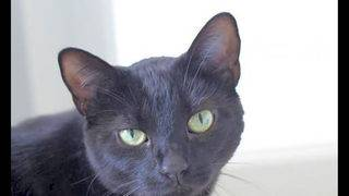 Looking to adopt a pet? Here are 3 cool kitties to adopt now in Jacksonville
