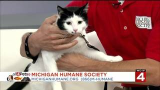 The Cat Days of Summer with the Michigan Humane Society