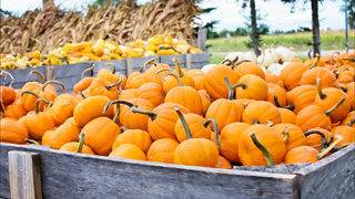 Best activities to enjoy in the Ann Arbor area this fall