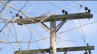 DTE Energy: 1,800 customers remain without power in SE Michigan