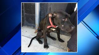Detroit Dog Rescue searching for people who left dog on side