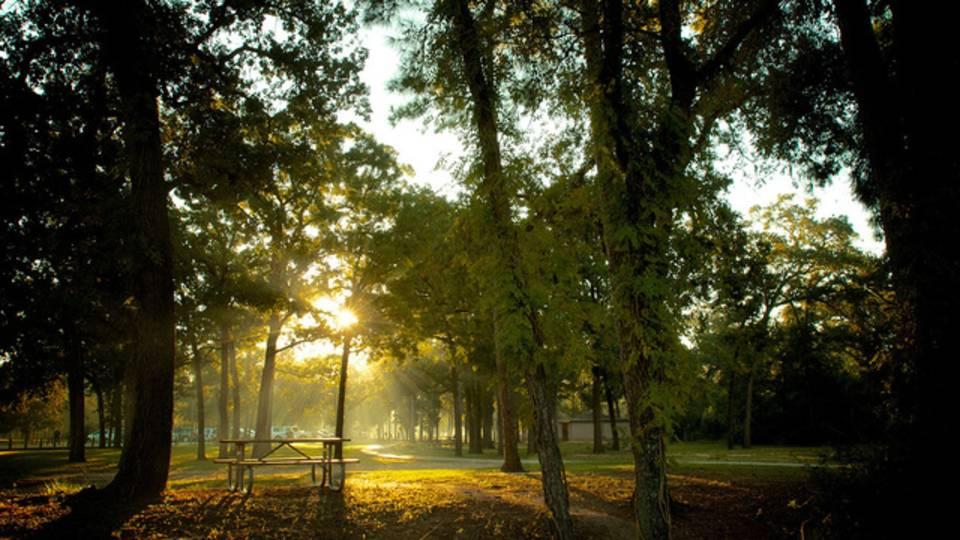 Memorial Park Sunrise Image_Courtesy of Memorial Park Conservancy_1524681389599.jpg.jpg