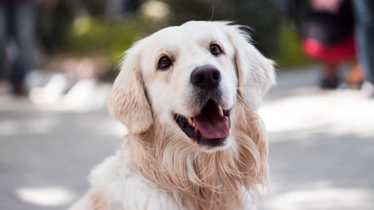 dog-classes-3-061719.jpg