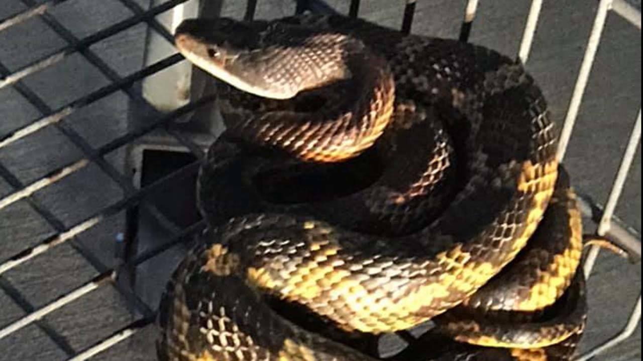 snake3_1559066535983.jpg
