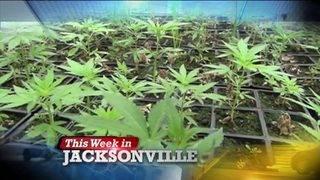 Decriminalizing marijuana, Operation New Hope and Ability Housing