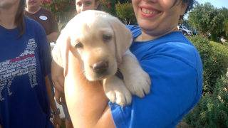 Puppies begin trek toward becoming guide dogs for visually impaired