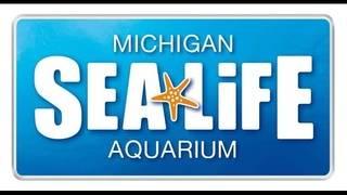 SEA LIFE Michigan holding Shark Week events beginning Sunday
