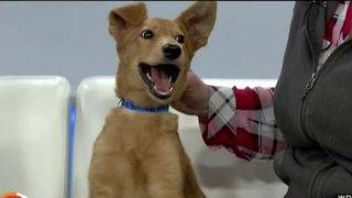 Find your new best friend at 'Empty the Shelters' event this weekend