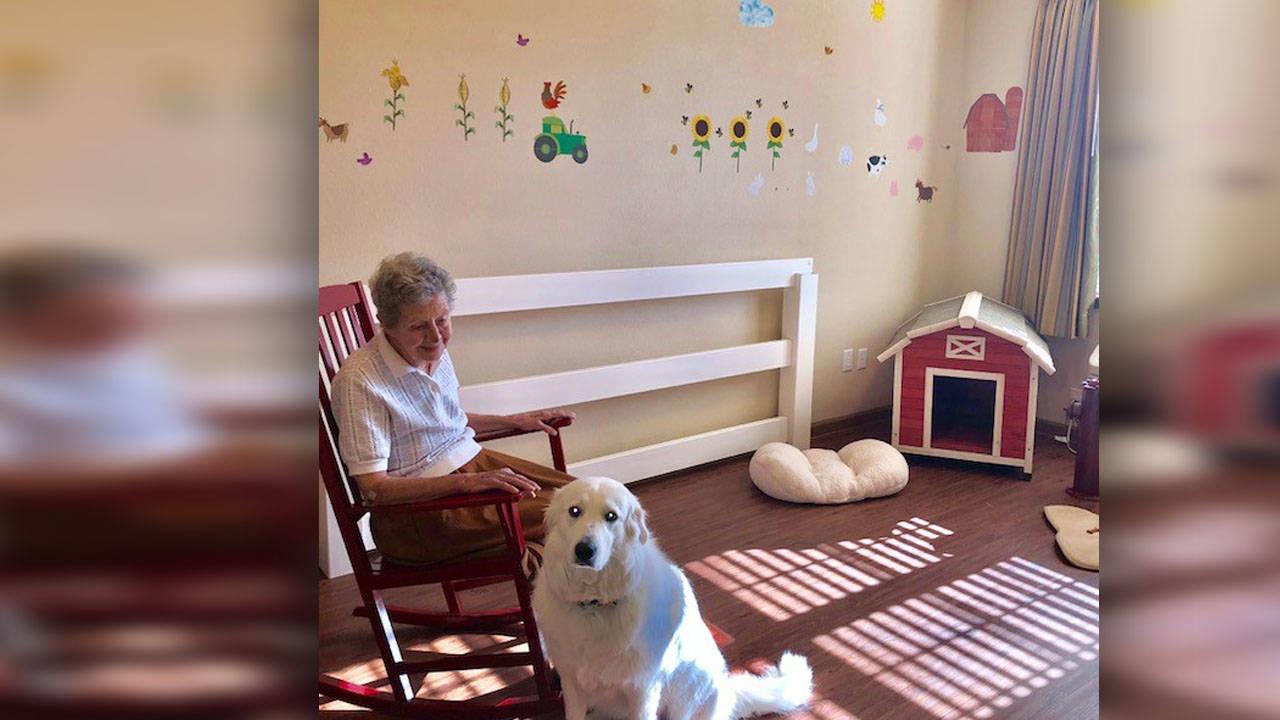 doc the dog 2_1528863603759.jpg.jpg