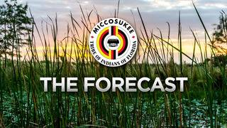 Local 10 Forecast Thursday July 19 Night