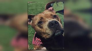 Dog missing for 14 months reunited with Clay County family